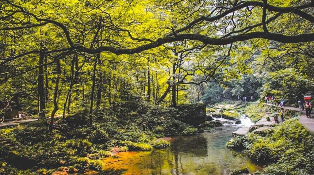 Jinbian Brook
